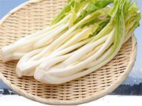伝統野菜「雪菜」