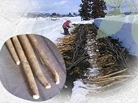 雪国育ち。大石田町自然薯